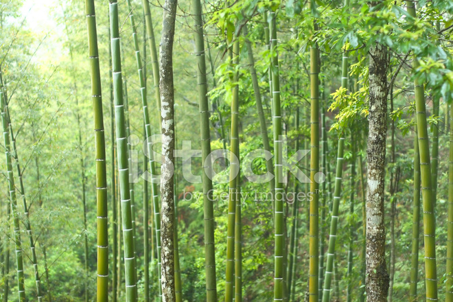 Bambus Wald Stockfotos Freeimages Com