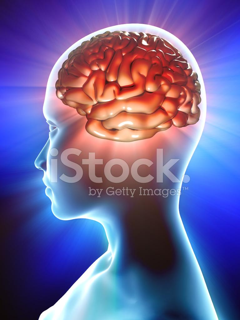 Brain Inside Profile of Human Stock Photos - FreeImages.com