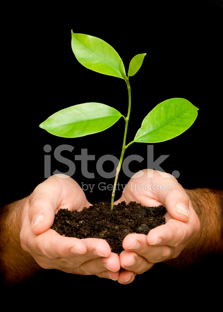 Sapling In Palms As A Symbol Of Nature Protection Stock Photos