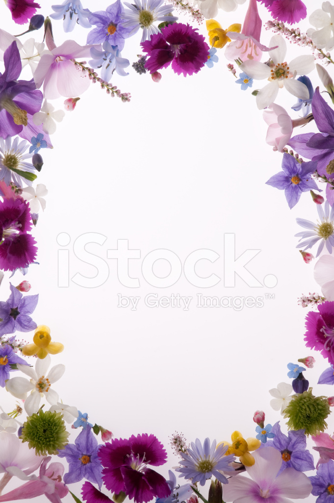 Spring daisy border stock photos freeimages purple white yellow and pink spring flower border or frame mightylinksfo