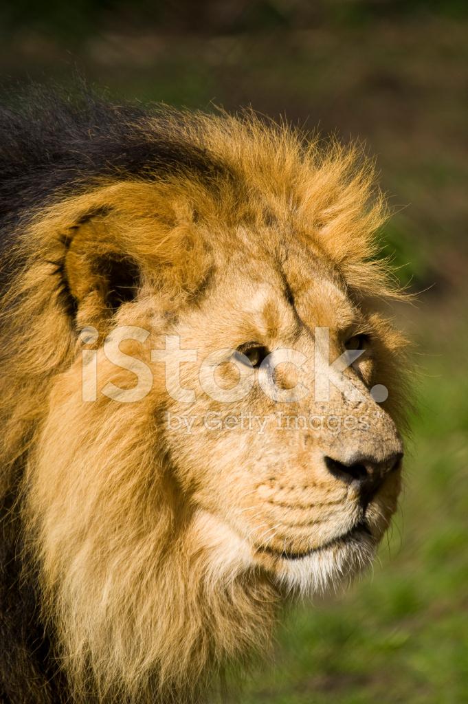lion架子鼓谱子