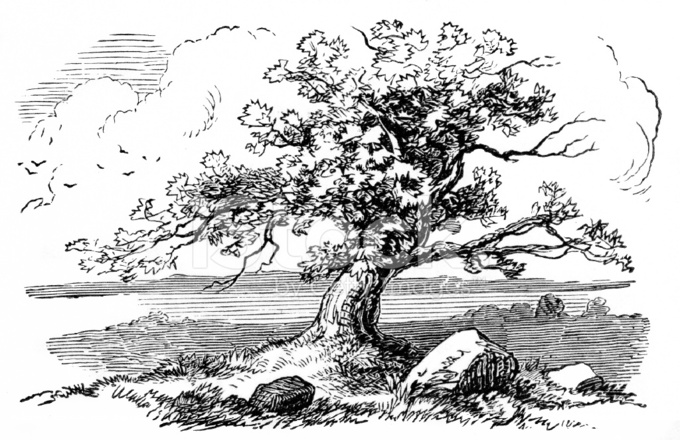 tree etching Gallery