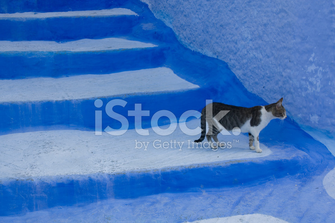 Cat On A Whitewashed Stairs