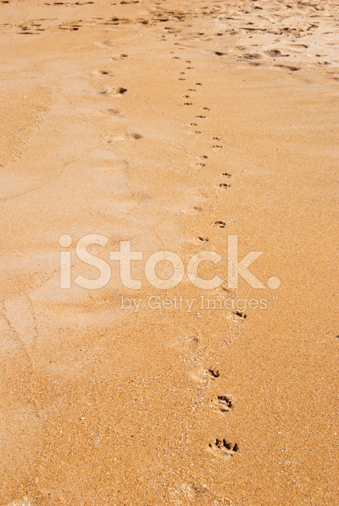 b0445b4d9 Paw Prints IN The Sand Stock Photos - FreeImages.com