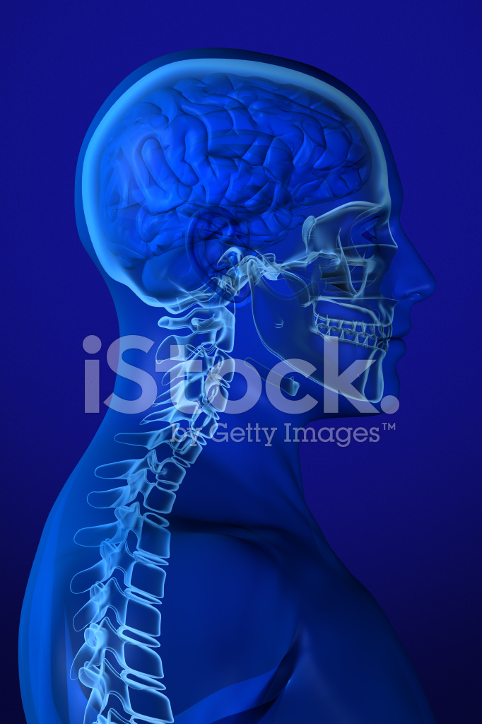 Anatomía DE Cabeza DE Rayos X En Azul Fotografías de stock ...