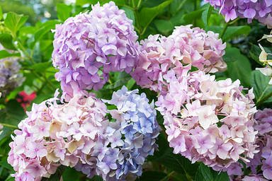 Gardening, Chrysanthemum, Daisy, Dahlia, Campanula, Plant, Fragility, Outdoors, ...
