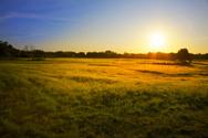 Sunrise - Dawn,Meadow,Field...