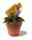 Money Tree,Currency,Tree,Gr...