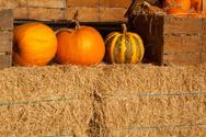 Pumpkin,Autumn,Photography,...