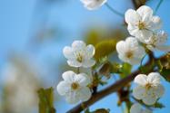 Springtime,Blossom,March,Fl...