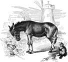 Donkey,Dog,Old-fashioned,Pe...