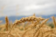 Bread,Routine,Barley,Wheat,...