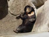 Sloth,Bear,Animal,Sleeping,...