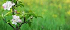 Springtime,Bud,Blooming,Flo...