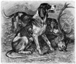 Dog,Engraved Image,Hunting ...