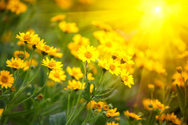 Flower,Summer,Springtime,Na...