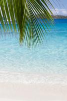 Beach,Caribbean,Palm Tree,T...