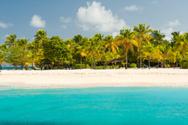 Caribbean,Coconut Palm Tree...