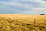 Paddock,Australia,Farm,Gras...