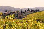 Tuscany,Vineyard,Italy,Wine...