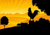 Farm,Rooster,Chicken - Bird...