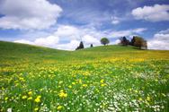Meadow,Flower,Field,Dandeli...
