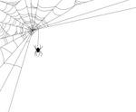 Spider Web,Spider,Frame,Sil...