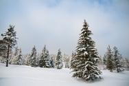 Snow,Christmas,Tree,Winter,...