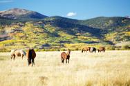 Horse,Mountain,Mountain Ran...