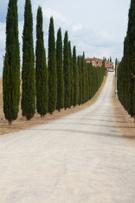 Tuscany,Villa,Italy,Cypress...