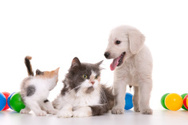 Domestic Cat,Dog,Pets,White...