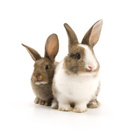 Rabbit - Animal,Pets,Animal...