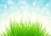 Grass,Springtime,Sun,Landsc...