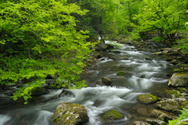 Stream,River,Forest,Waterfa...