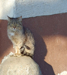 Domestic Cat,Outdoors,Brown...