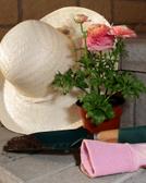 Patio,Formal Garden,Ornamen...
