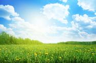 Field,Green Color,Flower,La...
