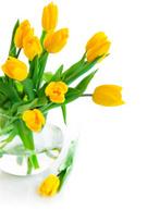 Flower,Vase,Glass - Materia...