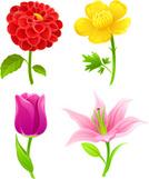 Flower,Dahlia,Buttercup,Sym...