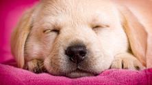 Dog,Grooming,Cute,Puppy,Sle...