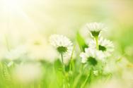 Flower,Springtime,Field,Bac...
