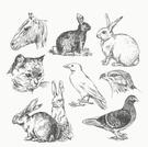 Hare,Rabbit - Animal,Domest...