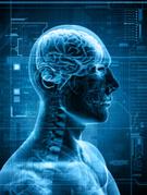 Human Brain,X-ray,Human Ner...
