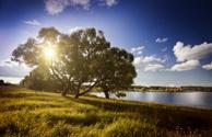 Tree,Landscape,Lake,Sun,Wat...