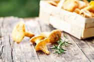 Chanterelle,Edible Mushroom...