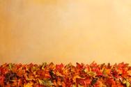 Autumn,Thanksgiving,Leaf,Ga...