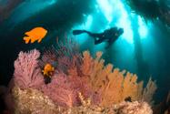 Scuba Diving,Underwater Div...