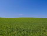 Grass Area,Pasture,Sky,Fiel...