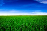 Field,Grass Area,Crop,Wheat...
