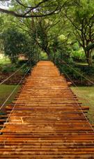 Bamboo,Bridge - Man Made St...